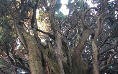 """18 giugno """"Cedi la strada agli alberi"""""""